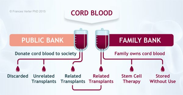 Read more about the article About Cord Blood Banking