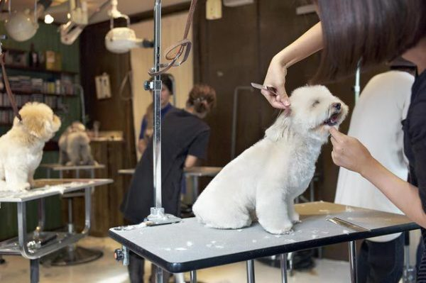 You are currently viewing HOW TO START A DOG GROOMING BUSINESS